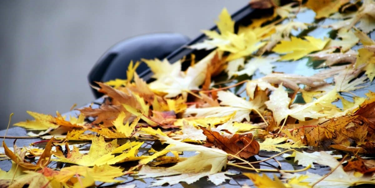 Risks posed to your vehicle by autumn leaves