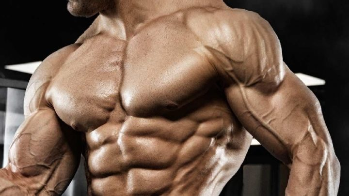 What are the principles of muscle growth?